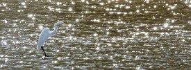 CT crystal bird CDT_7663