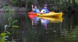 Carteret County is one of the best kayaking destinations in the United States, attracting enthusiasts from around the globe who want to enjoy the serene beauty found in the streams, rivers, marshes and estuaries. (Photo by Kevin Geraghty)